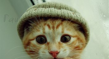Catwithahat