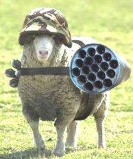 sheepyowl