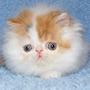 KittyKatt