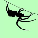 spydercanopus