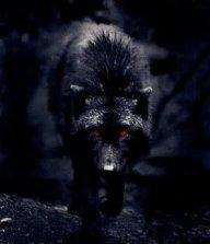 blackwolf12333