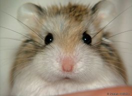 HamsterTwink