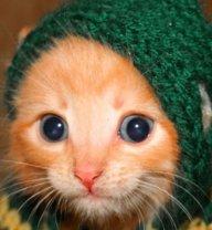 TRIPL3_CATS